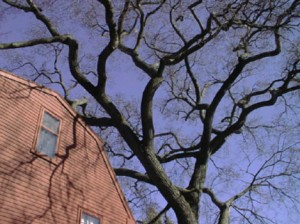 Preventive Tree Removal Services in Dayton Ohio by MRB Tree Service